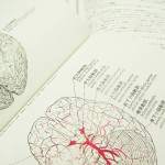 脳は差分検出器で、学ぶと精度が上がる