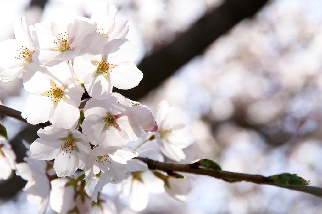この先に咲く花を見る